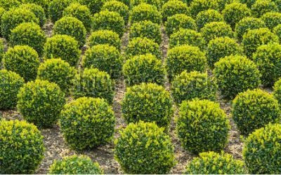 Verkoop van tuinplanten